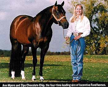 Big Incentives Article Quarter Horse Aqha Sire Zips