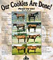 Click here to see Ann's Home-Baked Horses For Sale!